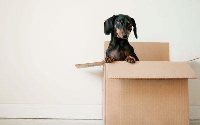 The Full Packing Materials List: What, Why, Where
